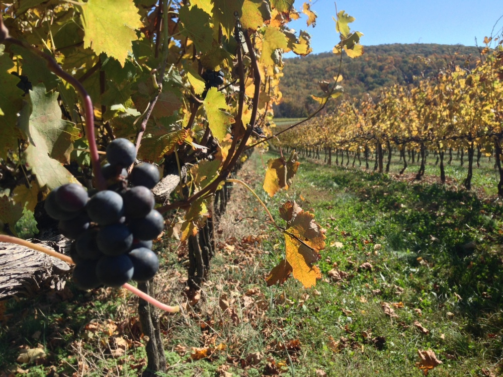 5 Fall Getaway Ideas: Breaux Vineyards via From the Road I'm On