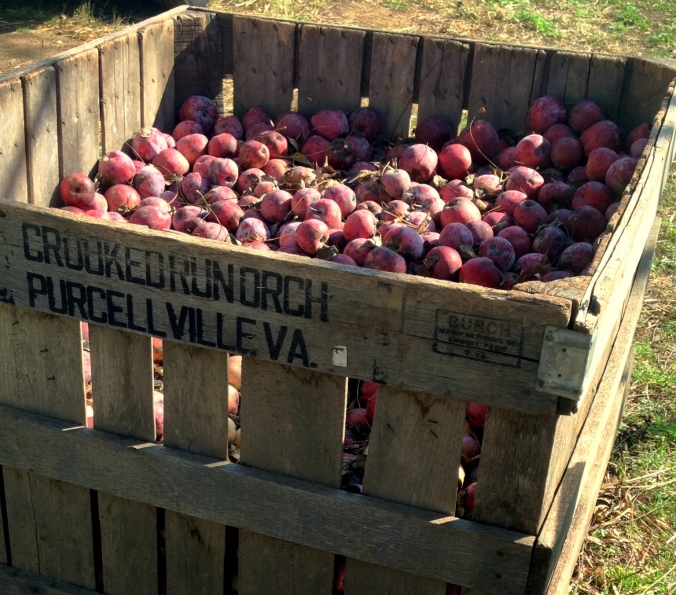 5 Fall Getaway Ideas: Crooked Run Orchard via From the Road I'm On