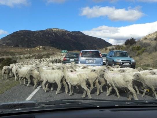 fromtheroadimon_newzealand